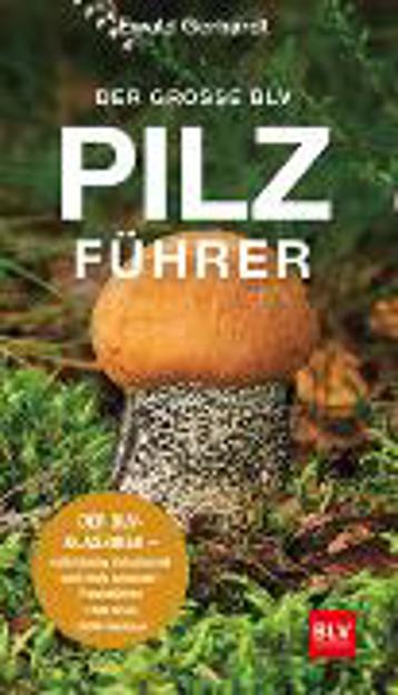 Bild zu Der große BLV Pilzführer von Gerhardt, Ewald
