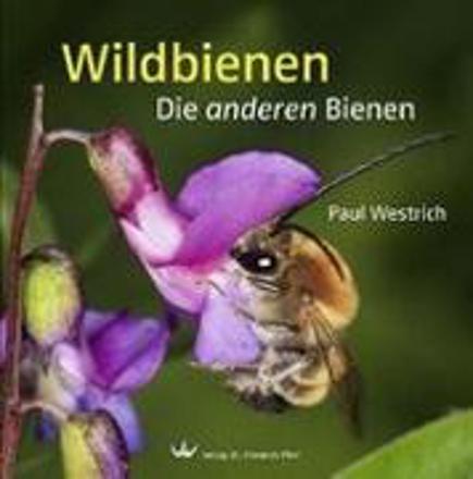 Bild zu Wildbienen von Westrich, Paul